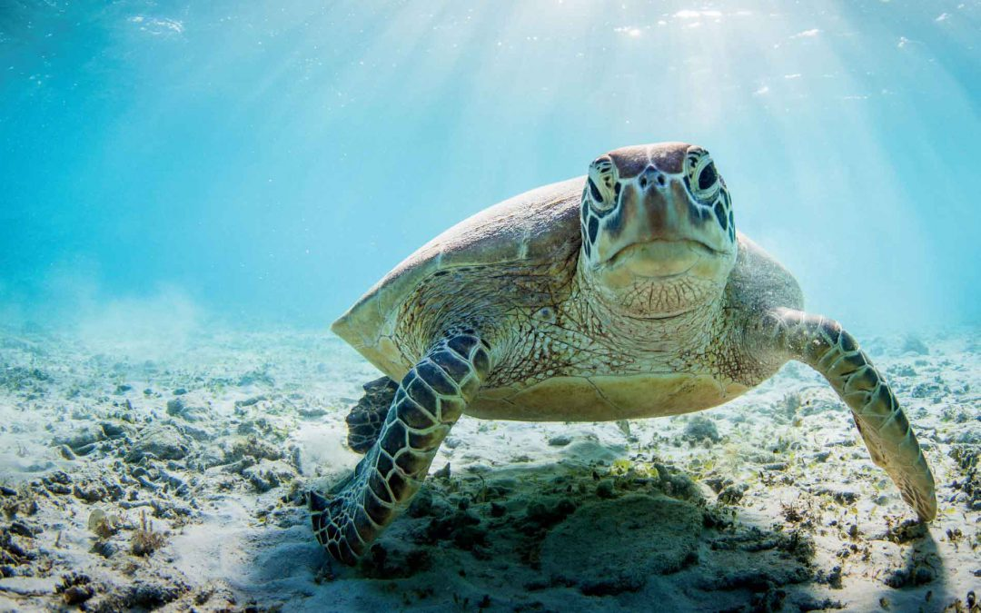 5 Fun Facts About Sea Turtles