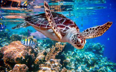 Five Reasons We Love Sea Turtles